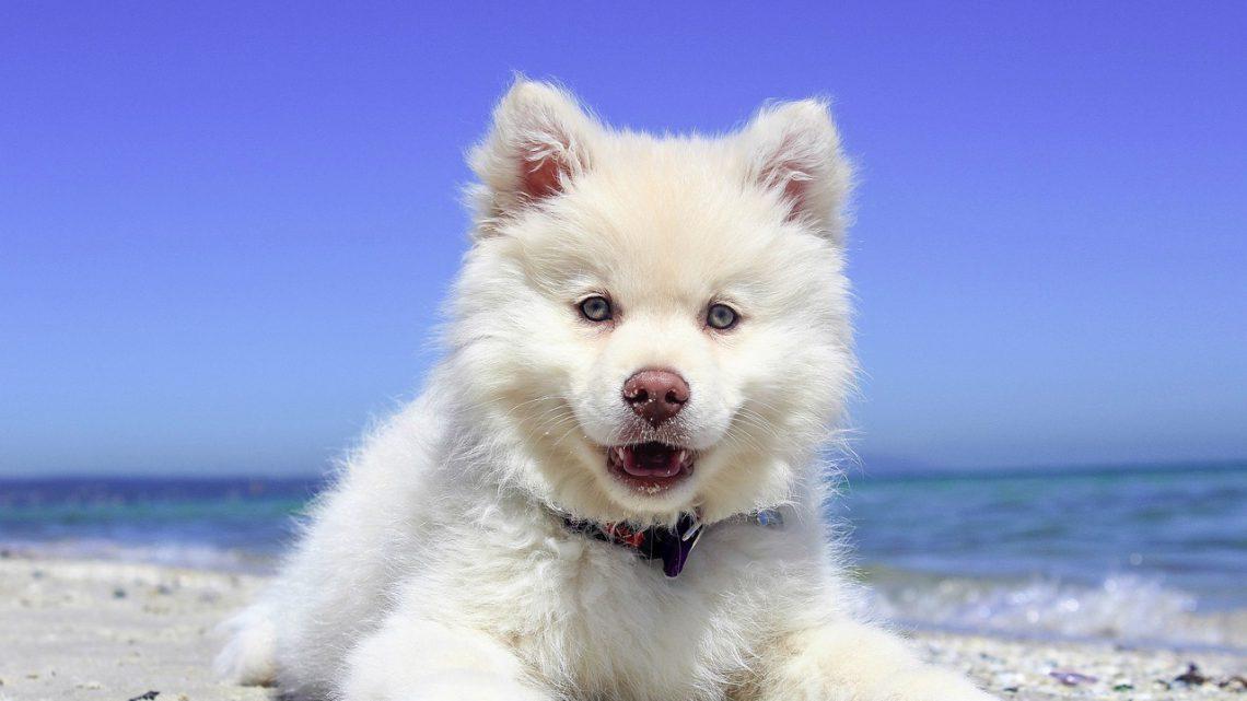 Reizen met je hond(en)